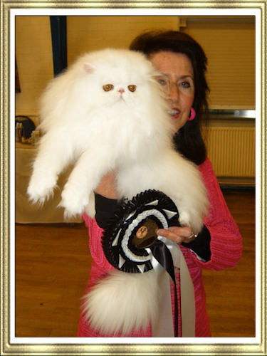 Lafrebella Joy - Best in Show Kitten at Black & White Cat Club Show 2009