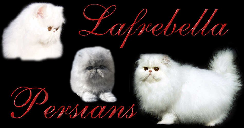 Welcome to Lafrebella Persians